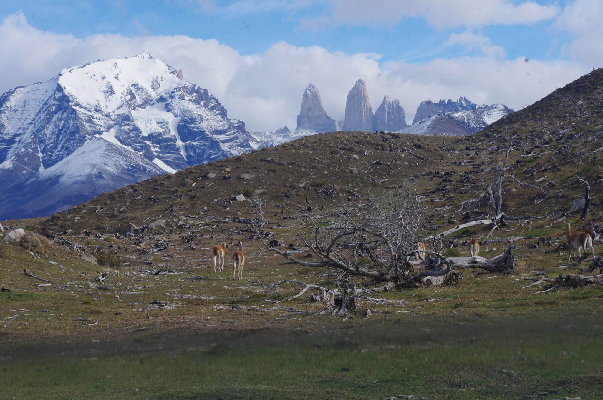 Torres del Paine- highlights tour